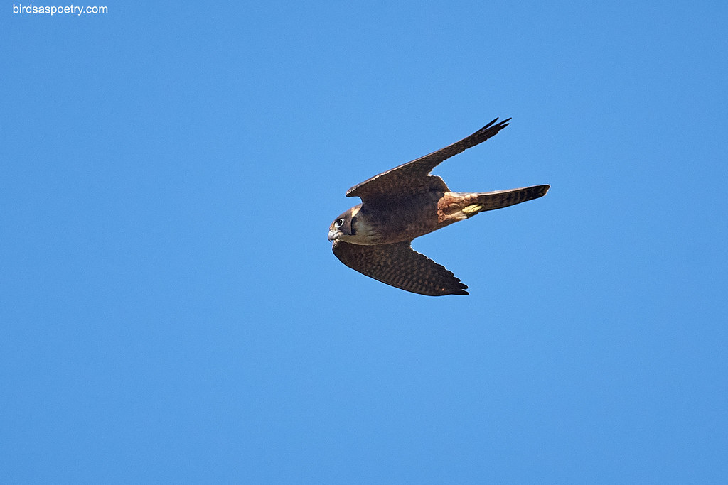 Australian Hobby: Full Power- Target Acquired