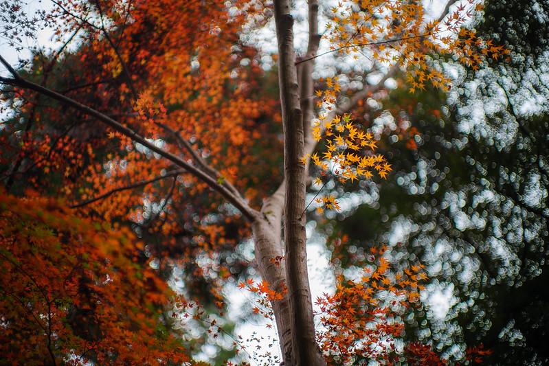 Autumn leaves F0.95