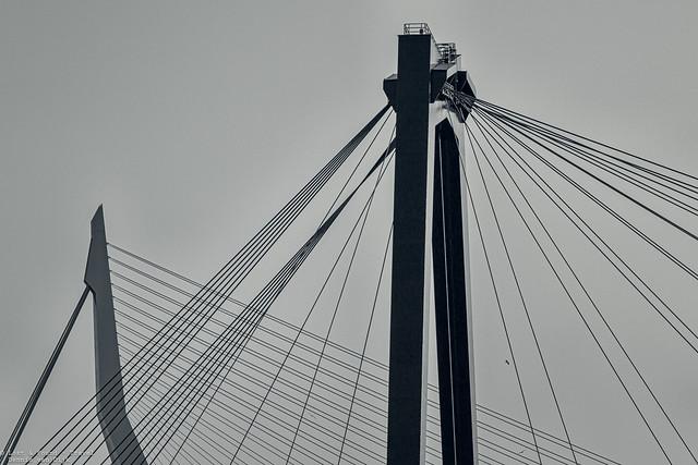 Bridges, Rotterdam - The Netherlands