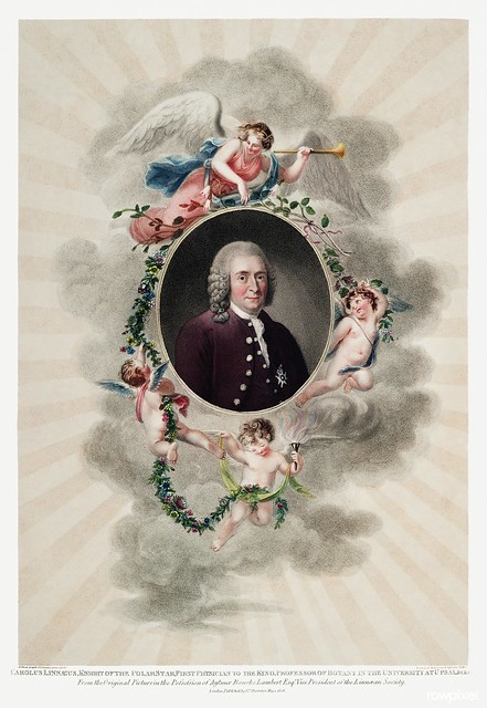The Portrait of Carl Linnaeus from The Temple of Flora (1807) by Robert John Thornton. Original from Biodiversity Heritage Library. Digitally enhanced by rawpixel.