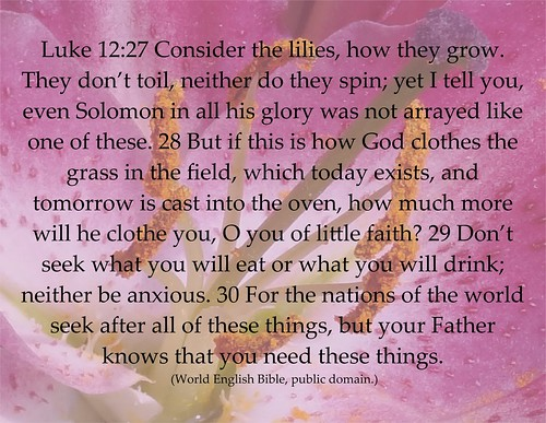 Luke 12 God takes care of lilies, so He'll care for us, too