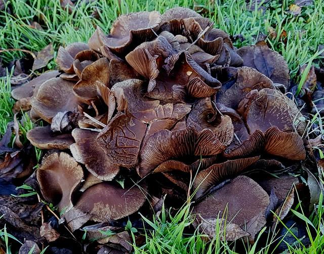Chou-fleur de champignons.