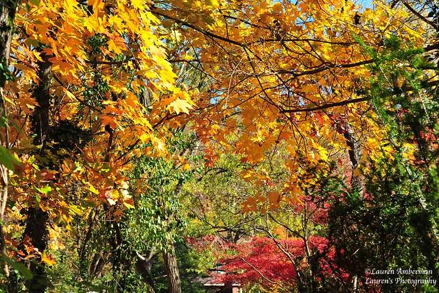 Canopy of color (EXPLORE, Nov 25, 2020)