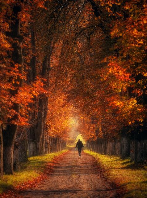 autumn alley ...