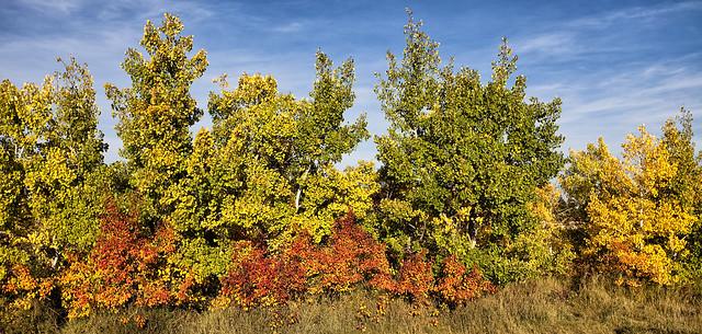 Fall Colours,