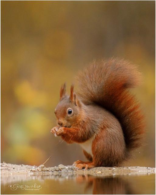 cute squirrel - in EXPLORE #81