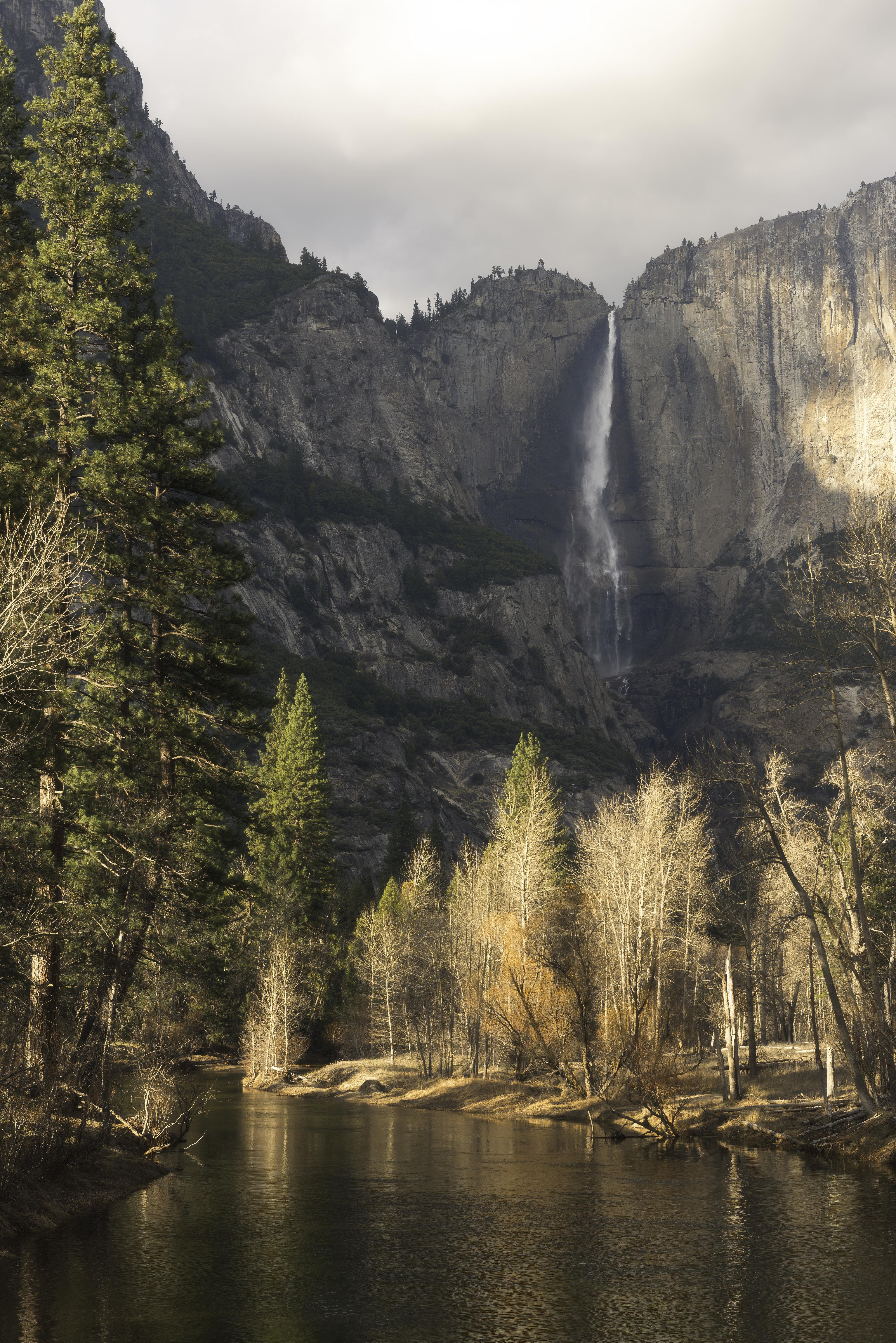 Some gorgeous morning light at Merced River, Yosemite National Park California [4100x6144][oc]