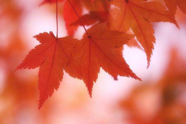 Leaf art! 🍂