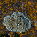 Naturgemälde - Flechten auf Basaltfelsen