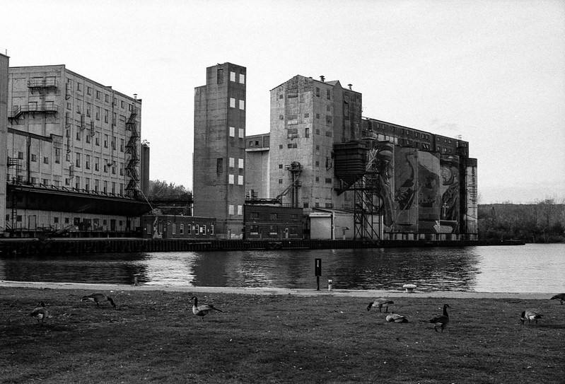 Canada Geese and Mill_