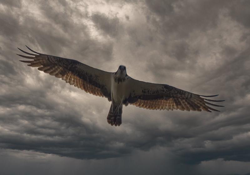 Les ailes de l'orage... 50645556486_744285a134_c