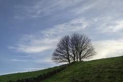 Wall+Trees
