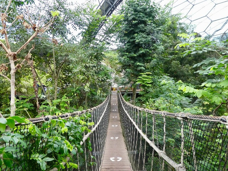 The elevated walkway, Rainforest Biome, Eden Project