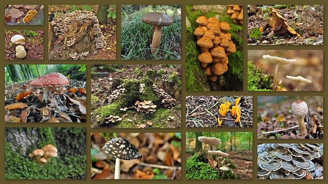 Paddenstoelen / Mushrooms in 2020