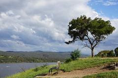 Bench and tree at Googong Dam