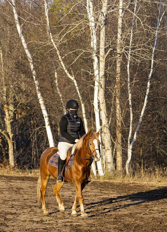 Rider with Birches