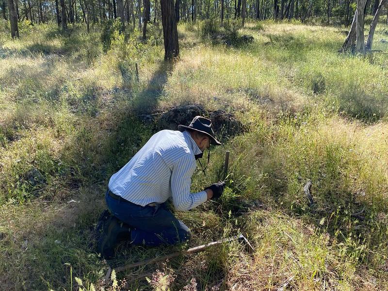Cryptandra weeding - Neville Bartlett