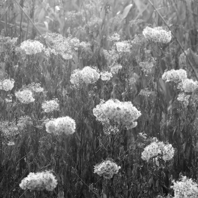 seeds in misty sunrise