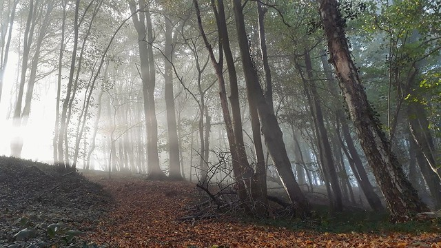 A morning in a misty forest