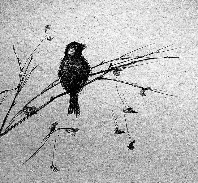 Sparrow perched at the top of our tree this morning. Ballpoint pen drawing by jmsw, on recycled card. Only on this site, just for Fun.
