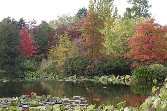 2020 Arboretum 3