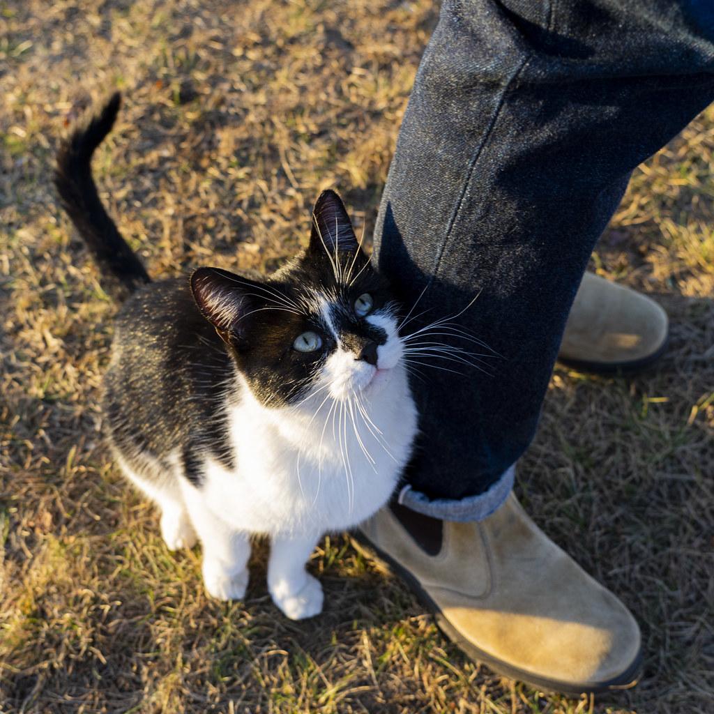 Cats Love Raw Denim