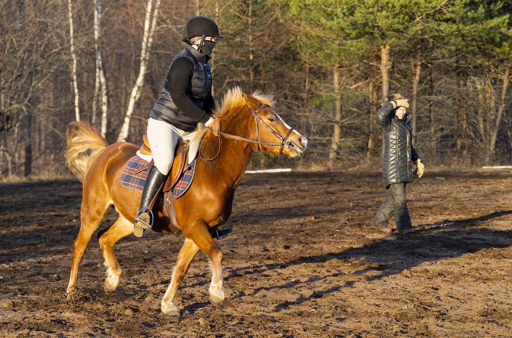 Training a Small Pony