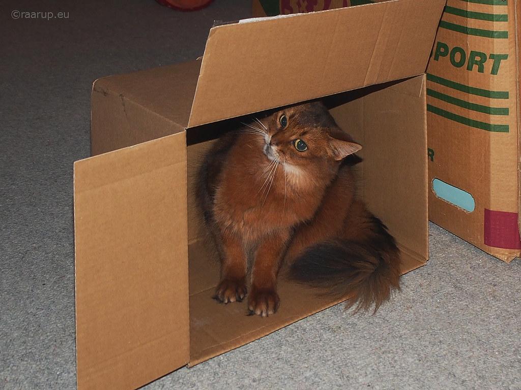 Caithlin's got a brand new box...