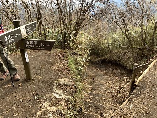 金時登山口と金時神社登山口の分岐