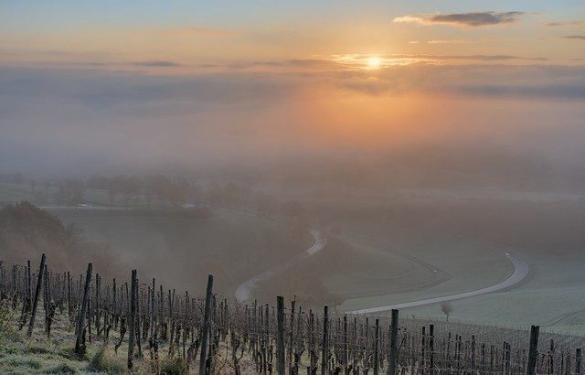 *Sunrise at the vineyard @ new processing*