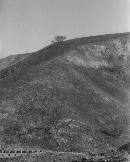 Tree on burnt hill