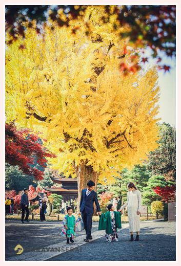 永保寺のイチョウの大木 紅葉 家族写真