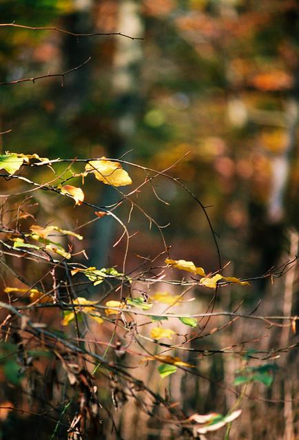 On a sunny autumn day