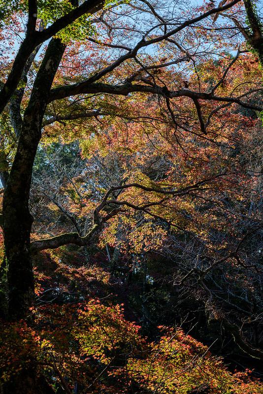 Late Autumn at Mt.KASAGI