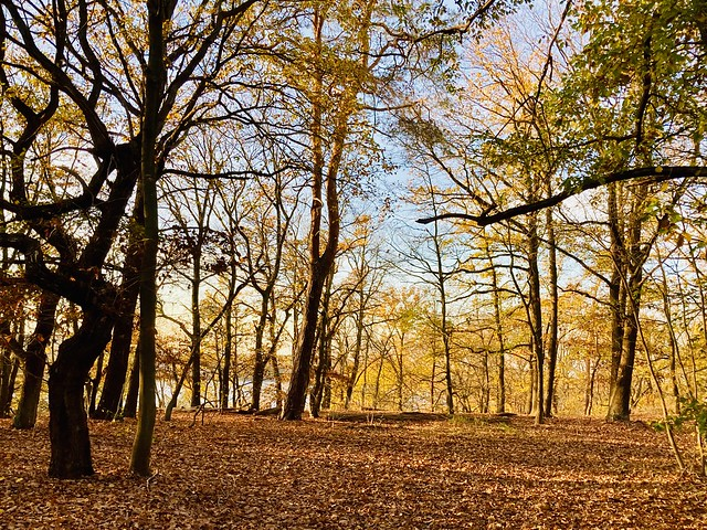 Leuchtende Wälder- das war's doch  noch vor wenigen Tagen