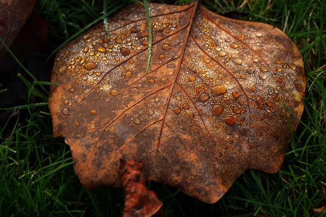 Dauwdruppels  /  Dewdrops