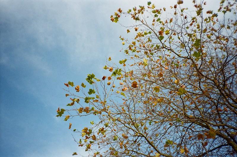 cs - autumn tree