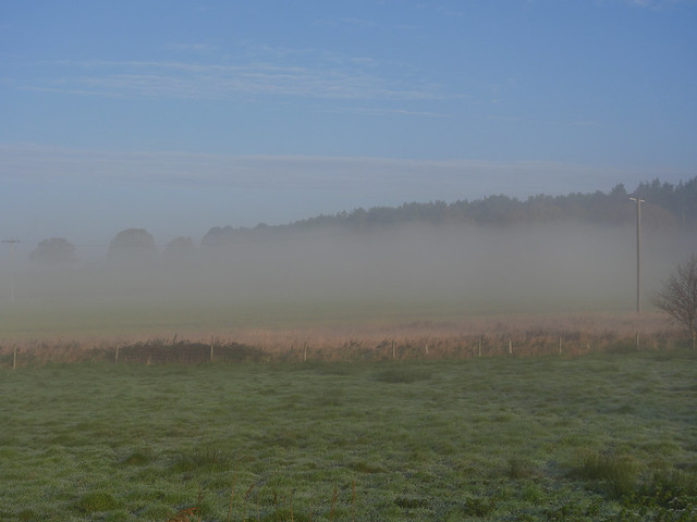 Misty view of Bacton Wood.