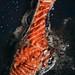 A Hidden Kitchen_ Roasted Salmon 🍣