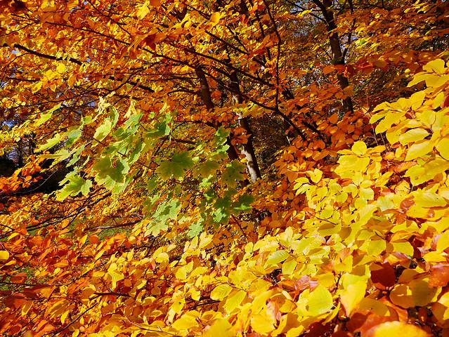 Fall Power