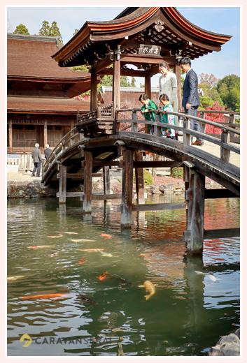 永保寺の池には錦鯉 七五三の前撮り 岐阜県多治見市