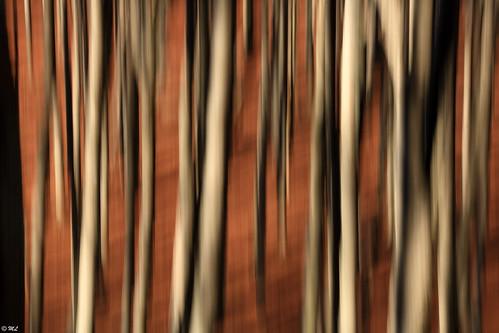 Dark forest