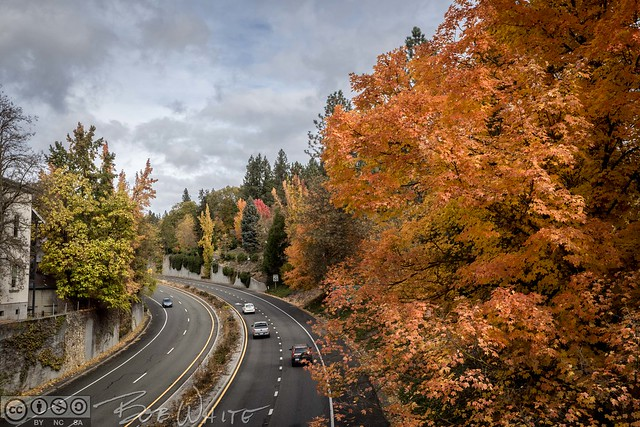 Fall in town