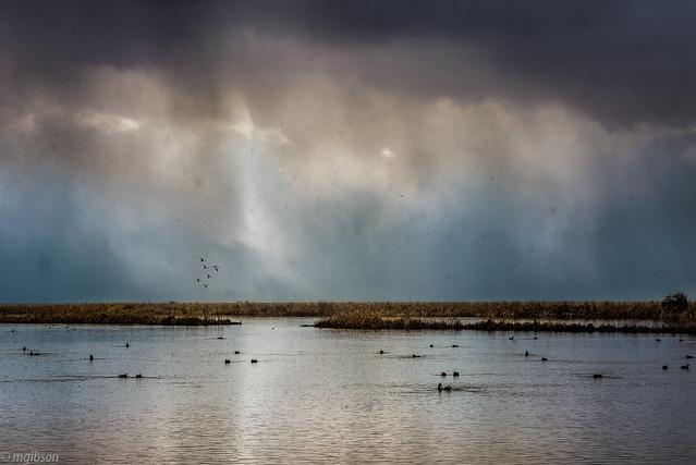 Weather, wetlands