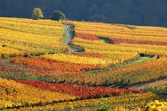 vineyard color explosion