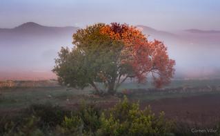 Una mañana temprano