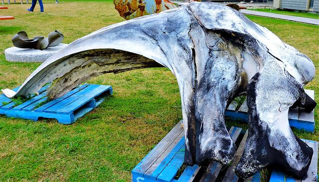 Whale bone