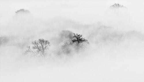 Bwlch trees 8309 (philip hayman)