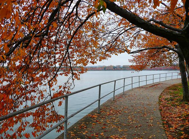 Autumn Leaves in Washington, DC