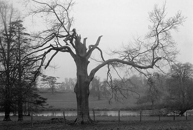 River Lea, near Luton, Beds, 1983 33e-14_2400